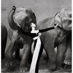 Black Floor Length Gown with White Waist Sash by Dior 1955, Model featured with elephants