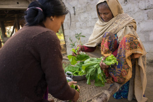 November 19, 2013 - Binauna village, Banke (Nepal). Jharana Kumari Tharu and her mother-in-law, 70-year-old Ashpati Tharu, clean vegetables for lunch. Jharana is a female community health volunteer in Binauna village, in Nepal's Banke District where she works encouraging better health behaviors among Nepal's underserved populations, including expectant and new mothers. Her mother-in-law also volunteered in the same role for 21 years and encouraged Jharana to take up the work.