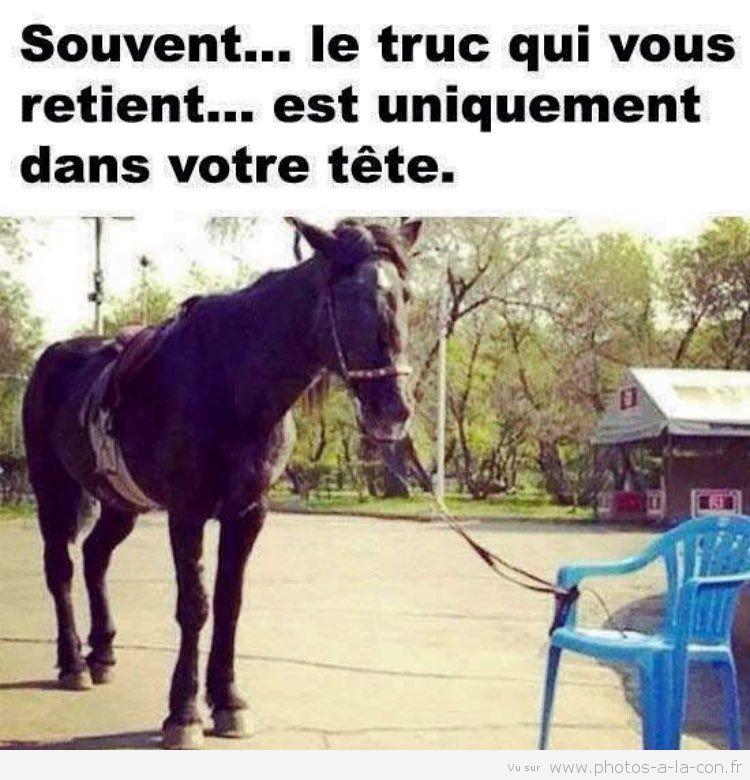 image d'un cheval qui se croie vraiment attaché