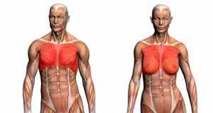 Muscler les pectoraux - Liste des Exercices