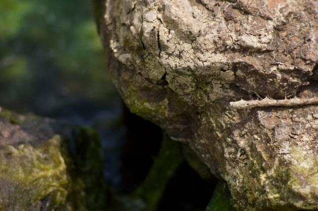 mossy rock water