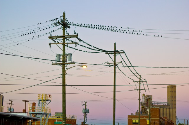 birds and a wire for them