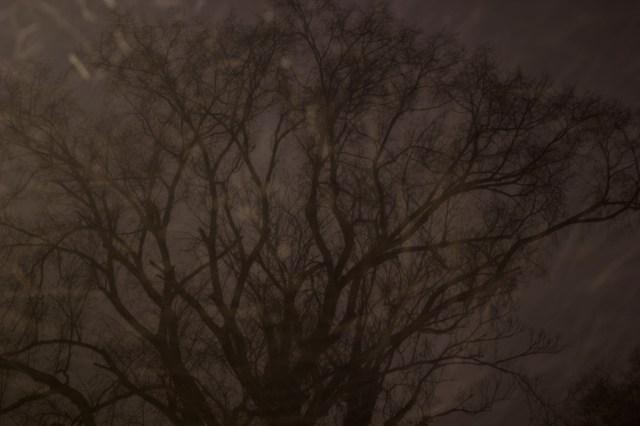 2014-01-22-tree_1280