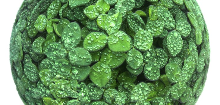 clovers with dew texture preview