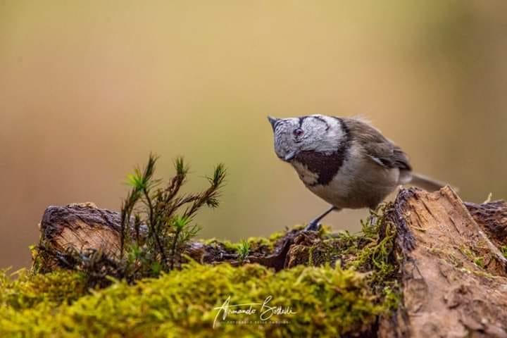 Read more about the article Il Sito Natura 2000