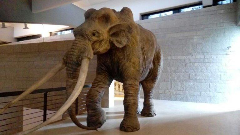 Read more about the article L'arrampicata e la caccia al mammut