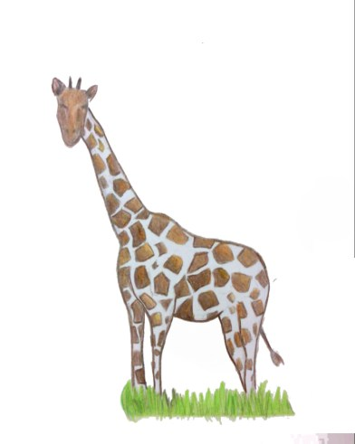 Liverani_giraffa