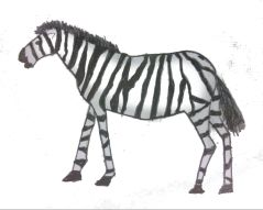 Piscopo_Zebra