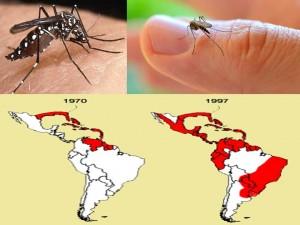 Aedes aegypti e sua distribuição geográfica ao longo do tempon (Fonte: http://professorgoncalves.blogspot.com.br/)