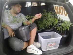 Homem que cultivava maconha