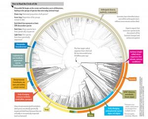 O círculo deve crescer com aumentos no número de espécies de bactérias e arqueas