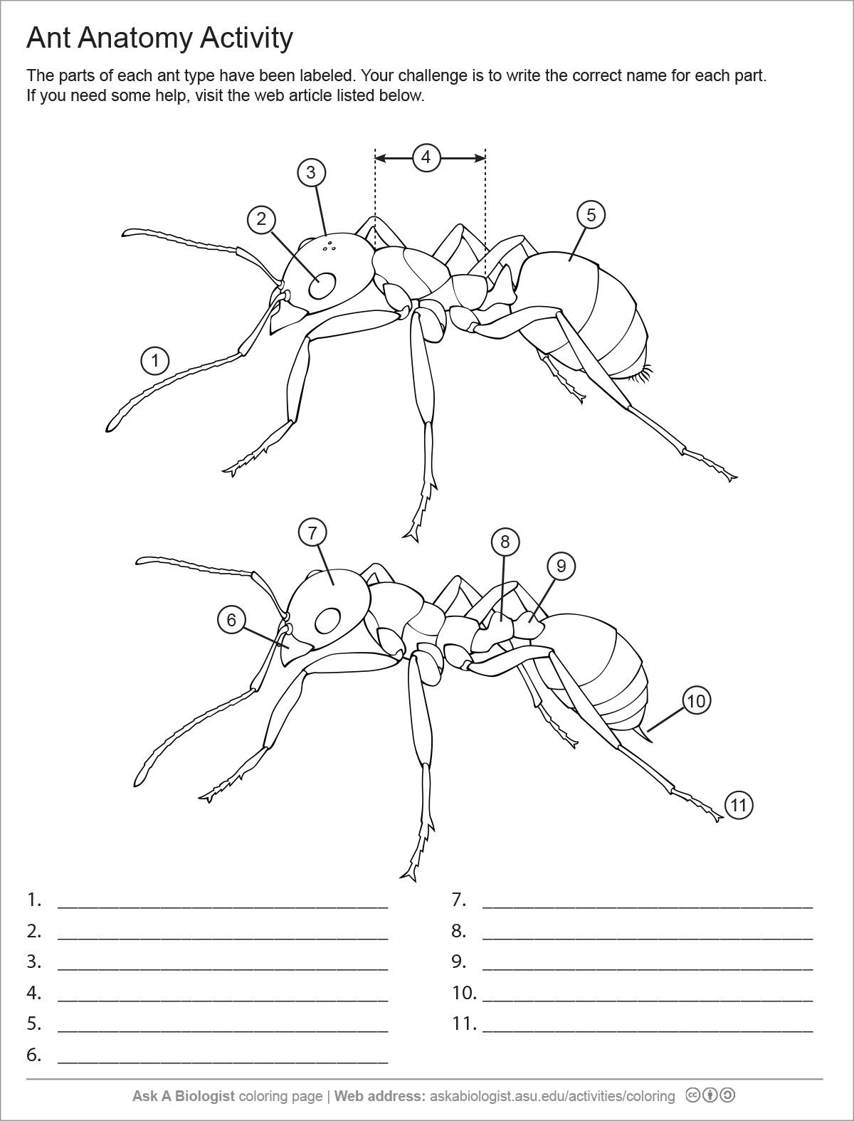 Ant Handouts