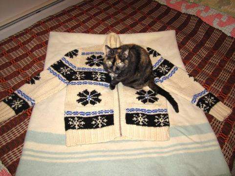 sweater-11-told-you-so
