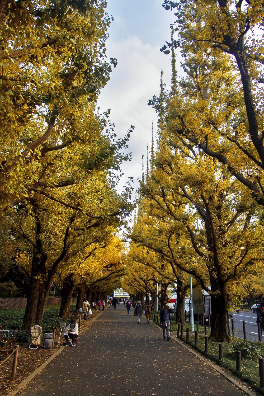 Ginkgo Avenue & Shinjuku Gyoen