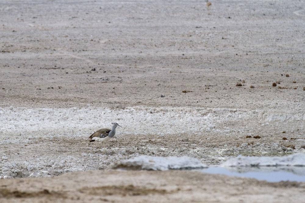 Birds of Namibia's Etosha National Park