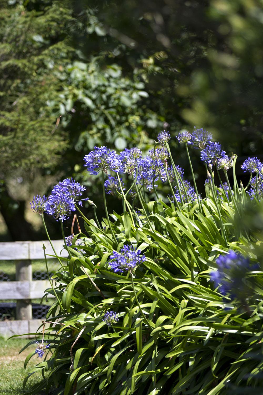 Kaikoura Lavender Farm