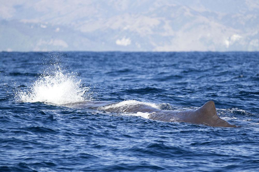 Kaikoura Whale Watch