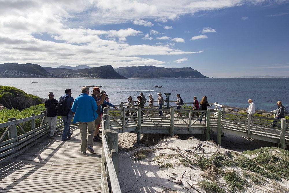 Penguin Colony Cape Town