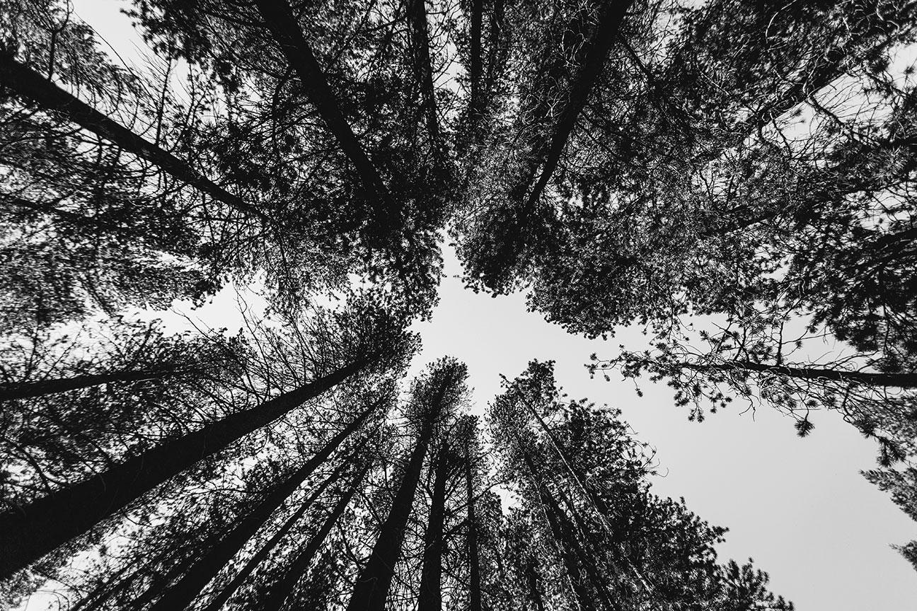 Yosemite-2016-(Photo-by--Devin-J.-Dilmore)-87