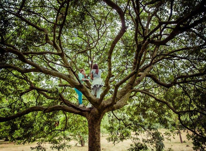 Tree Talkers