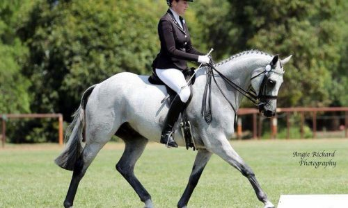 4 horse shows start in Sydney