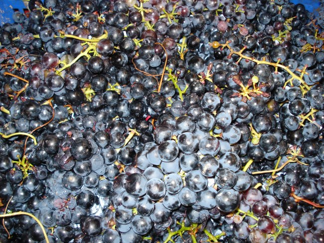 THE ORIGIN, PURE TEMPRANILLO!