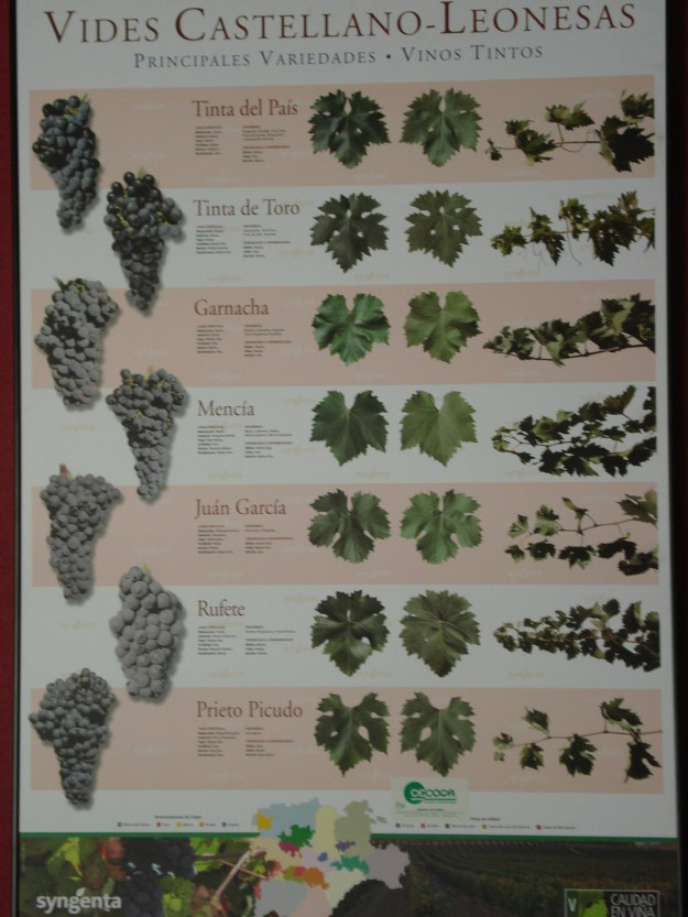 SPANISH GRAPE VARIETIES