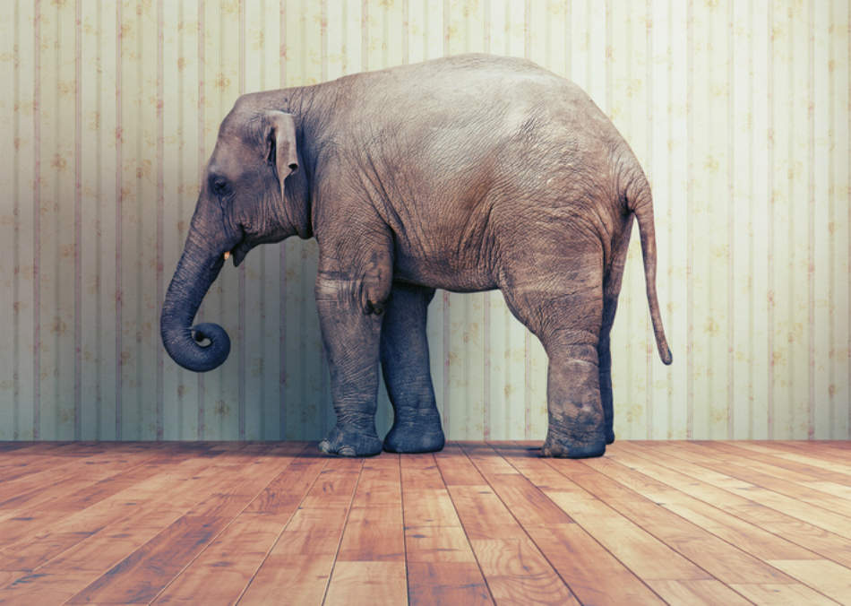 Don't Ignore The Elephant In The Room