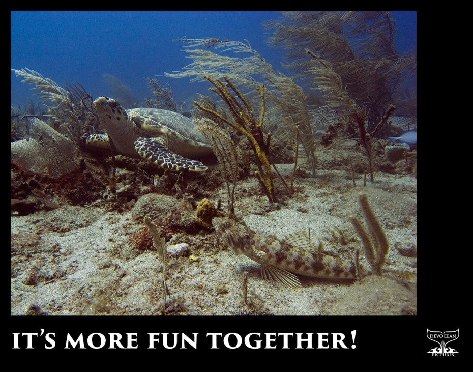 """""""It's more fun together"""" written on black frame below a picture of a turtle and fish hanging out together"""