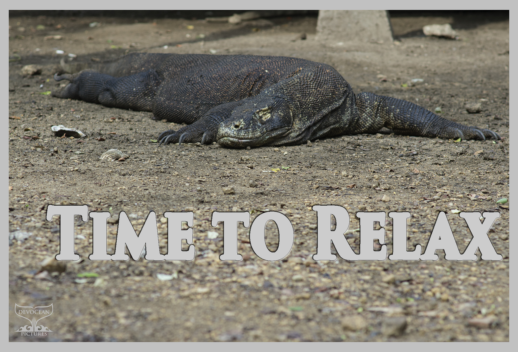 Postcard Warm regards from Devocean Pictures:A Komodo Dragon is chilling in the sun, digesting his last meal. Text: Time to relax.