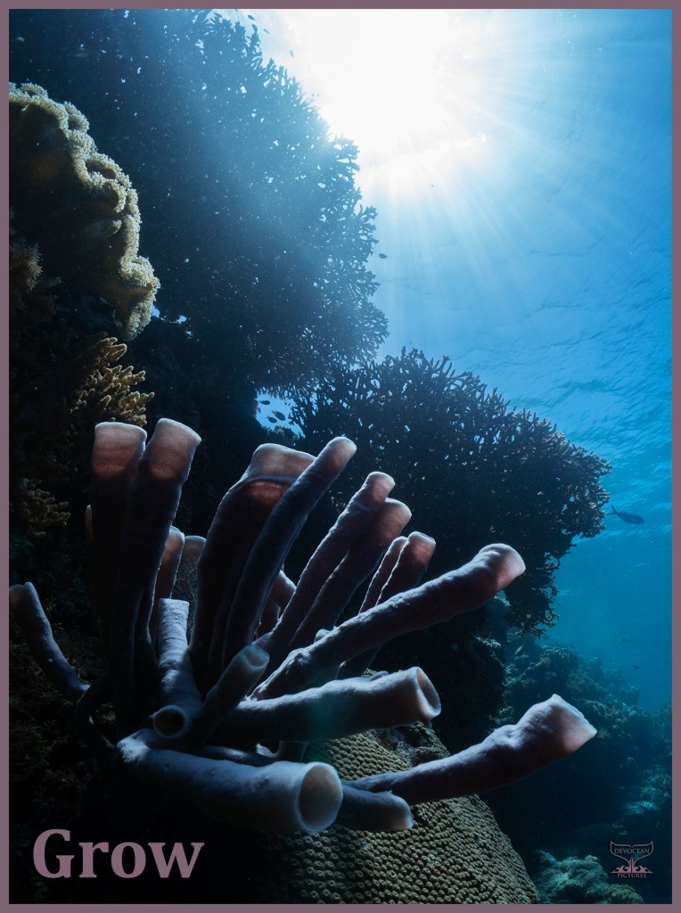 Postcard Warm regards from Devocean Pictures: Underwater wide-angle shot in shallow water with natural light only. Silhouette of reef with hard coral and sun burst illuminating leather coral and purple tube sponge. Text: Grow.