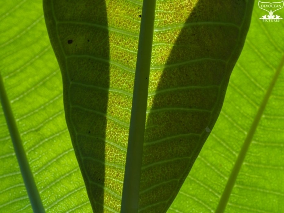 Photographing Art by nature: Close-up of green leafes, visible texture