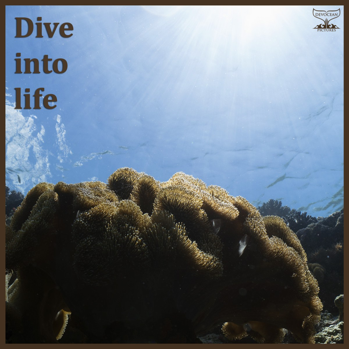 Postcard with alternative text: dive into life. Sunburst on hsallow reef with leather coral, natural light only.