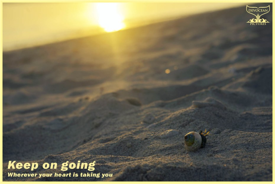 Postcard Devocean Pictures: Low angle on beach into bright setting sun illuminating hermit crab, Long Island, Andaman Islands. Text: Keep on going wherever your heart is taking you.