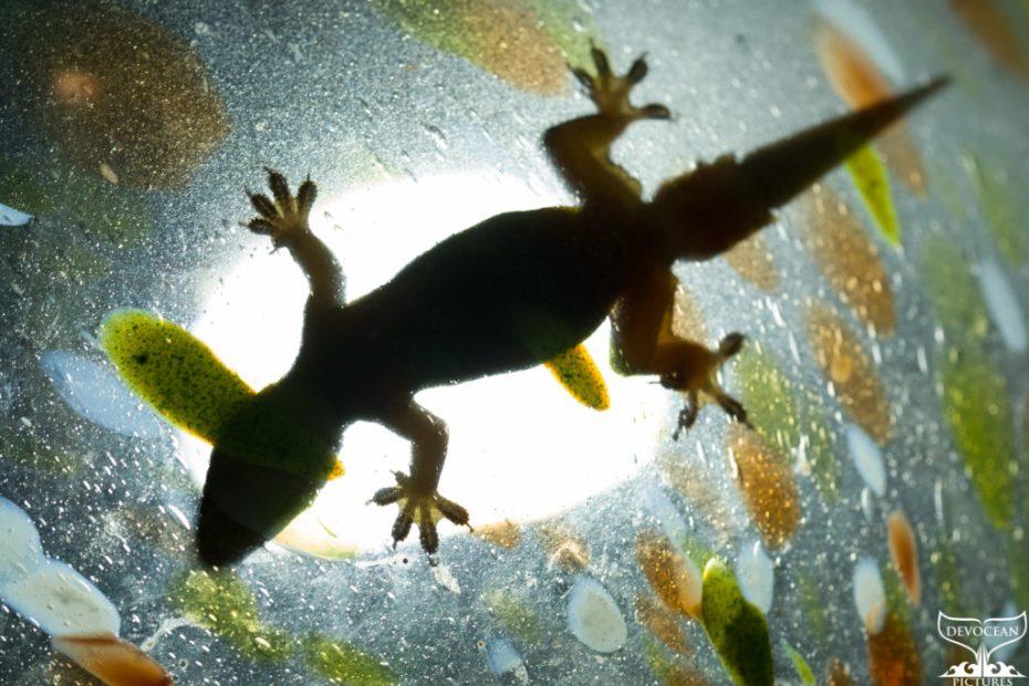Als Yoeri den Wachhund klaute und andere Begegnungen zwischen Mensch und Tier: Gecko im gläsernen Lampenschrim. Gecko in a lamp shining through the glass lamp shade with colourful spots