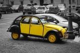 Roman Beetle-Rome Italy