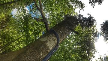 gruffalo-Hunt-Haldon-Forest-Stickman