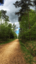 gruffalo-Hunt-Haldon-Forest-Walk-devon