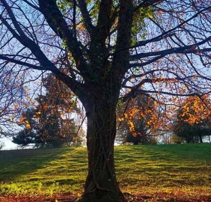 Parke-Devon