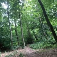 When We Explored Danes Wood