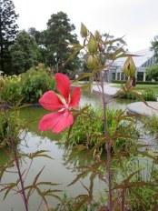 The Botanical Gardens @ St Kilda