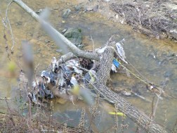 Upper Rock Creek - trash in Creek - just downstream of Ogontz Ave