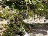 Tacony Creek Trash, Just Downstream Roosevelt Blvd, Left Side