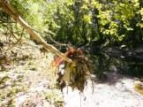 Tacony Creek Trash, Just Downstream Roosevelt Blvd, Right Side