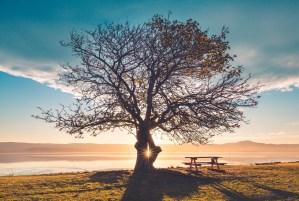tree no bear fruit