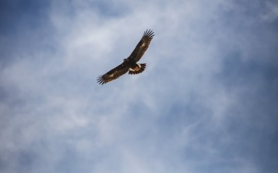 Daily Devotion – Soar on Wings Like Eagles