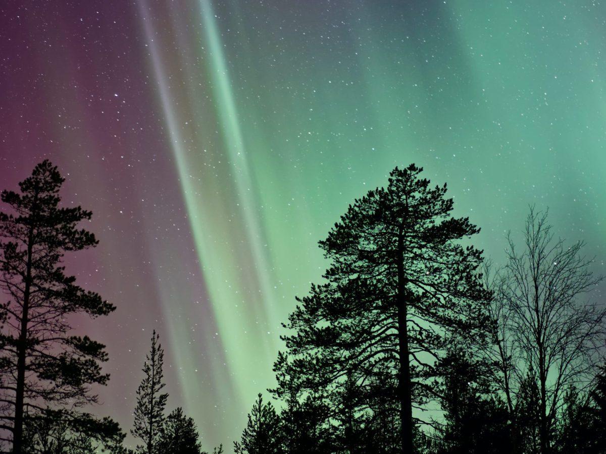 Aurora Borealis above some trees on the horizon at night