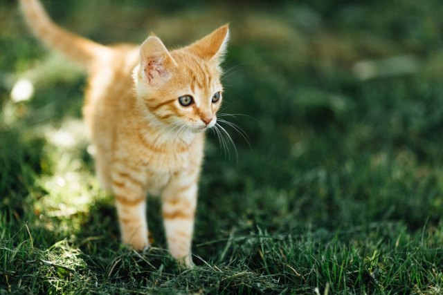 Top Tips For Letting Your Kitten Outside For The First Time Devoted To Cats