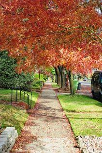 Sidewalk in autumn - Salem, Oregon wikimedia by M.O. Stevens GNU Free Documentation License