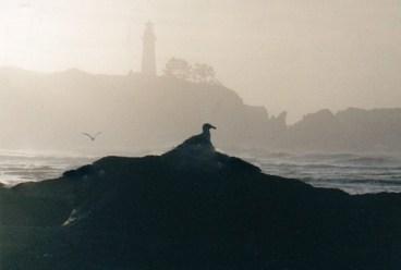 USA-Oregon-Newport-Yaquina-Head-Light-Seagull-wikipedia-GNU-Free-Documentation lic